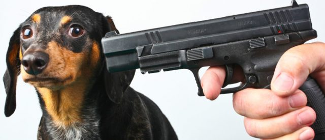 gun held to head of puppy