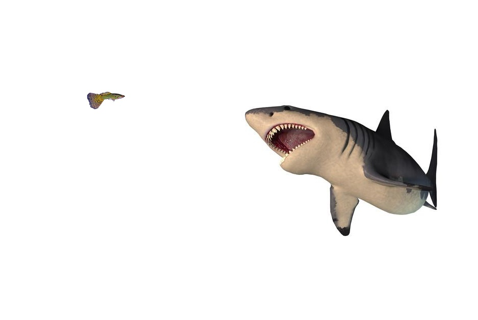 photo of shark attacking tiny tropic fish