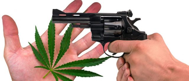 marijuana and gun picture