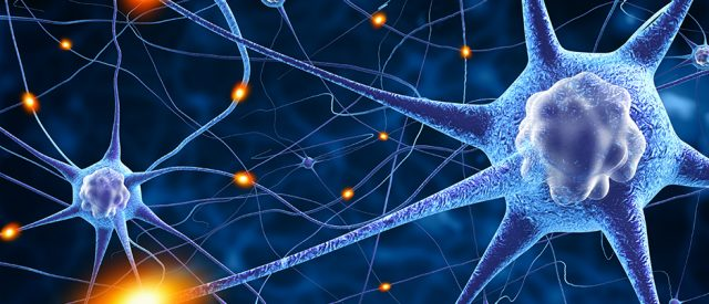 Nerve Cells, Axons