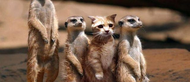 image of a cat with some prairie dogs representing miscategorization and not racism