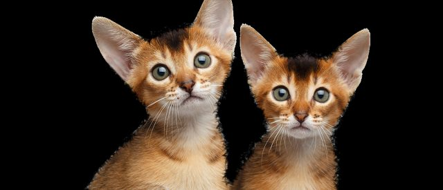 one of these is a cat and the other is not because of the arbitrariness of california criminal law